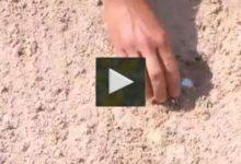 VÍDEO: Qué hacer cuando una bola se queda completamente enterrada en un búnker