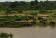 Elefantes en el European Tour: el jueves comienza el Alfred Dunhill