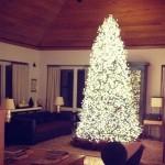 El árbol más luminoso: el de Vijay Singh