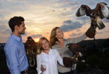 Las Colinas une el golf y el arte de la cetrería con la International School of Falconry