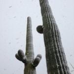 Curiosa la estampa de los cactus y la nieve en esta foto del European Tour
