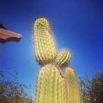 Graeme McDowell daba su bienvenida a Tucson con una imagen característica de la zona