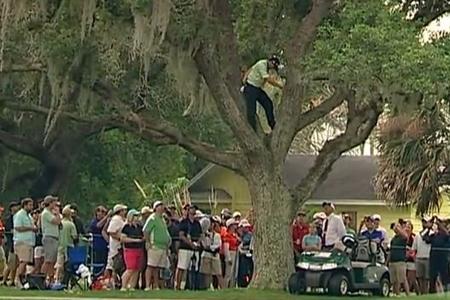Sergio García subido al árbol en Bay Hill