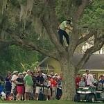 Sergio García subido a un árbol desde donde golpeó la bola en el Arnold Palmer Invit.