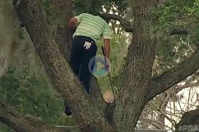 Aquel golpe de Sergio García subido a un árbol, de los más recordados en el Arnold Palmer Invitat.