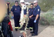 Pinchazo verídico: cayó a los cactus en Arizona buscando la bola