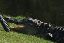 Un golfista pierde dos dedos por el ataque de un cocodrilo en Cancún