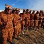 Grupo de fans de Tiger