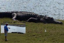 Golfista de Florida hace »Cocodrilo en Uno»