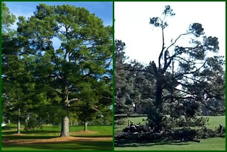 Árbol de Eisenhower: Antes y Después