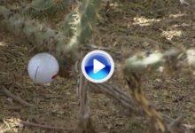 Stadler no pudo tener peor suerte, su bola se clavó en unos cactus (VÍDEO)