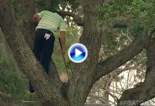 Este golpe de Sergio subido a un árbol, a lo Tarzán, todavía se recuerda en el Arnold Palmer (VÍDEO)