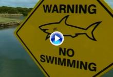 Ni cocodrilos ni caimanes, el peligro en el Carbrook Golf Club son los temidos tiburones toro (VÍDEO)