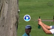 Así quedó la bola de Streelman en el hoyo 3, empotrada en un árbol (VÍDEO)