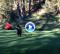 La danza del osezno en un campo de golf se convierte en viral en la red (VÍDEO)