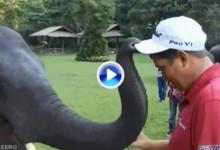 Un elefante le quita la gorra a Jason Dufner. Entrañables imágenes desde Tailandia (VÍDEO)