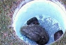 ¡Cuidado al coger la bola del agujero! se puede encontrar una serpiente como esta