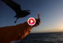 ¡Feliz Día de la Tierra! Hermosas imágenes remitidas por la flota (VÍDEO)