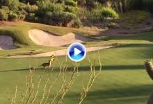 Del oso amoroso y el canguro perezoso al puma revoltoso. No se pierda el juego del felino (VÍDEO)