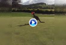 Un canguro se lía a golpes con las banderas sobre el green de un campo australiano (VÍDEO)
