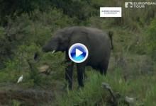 Alfred Dunhill Champ. (Sudáfrica): Resumen de los golpes destacados en su tercera jornada (VÍDEO)
