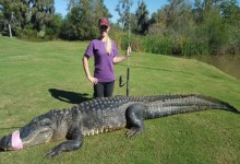 Capturan un cocodrilo de casi 300 kilos y 4 metros en un campo de golf de Texas