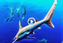 Michelle Wie disfruta de sus vacaciones nadando entre tiburones en la costa de Hawái (VÍDEO)