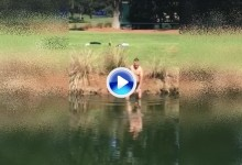 El inglés Greg Owen visitó el agua de Sawgrass para rescatar a un pájaro que necesitaba ayuda (VÍDEO)