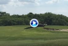 Un caimán de casi 5 metros se paseó por un campo de golf de Florida ante la sorpresa de todos (VÍDEO)