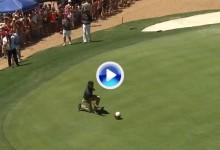 Stephen Curry se lo toma en serio: estudia la caída de los greenes con un balón de baloncesto (VÍDEO)