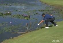 Stenson devolvió un caimán al agua en Marapendi después de hacerle cosquillas con uno de sus palos