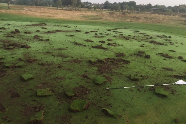 vandalos-en-el-rochford-hundred-golf-club-2