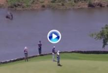 """Cuando Stone conoció a """"hipo"""" en Leopard Creek o la muestra de la simbiosis golf-naturaleza (VÍDEO)"""