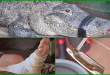 Golfista se salva del ataque de un caimán mientras jugaba al golf utilizando su putter (Incluye VÍDEO)