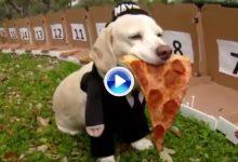 Un perro adivino amante de la pizza pronostica que Sergio saldrá campeón en el WGC de Austin (VÍDEO)