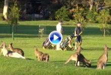 Una pareja, de yincana en Australia. Le tocó sortear a decenas de canguros para seguir jugando (VÍDEO)