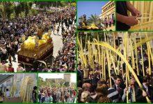 Semana Santa en Elche, en el Palmeral más grande de Europa
