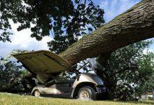 Un hombre queda atrapado en su buggie tras caerle un gran árbol encima y aplastar el vehículo