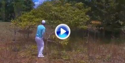 El campeón en Mauricio jugó 12 hoyos con 13 palos al partir uno contra un árbol en este golpe (VÍDEO)