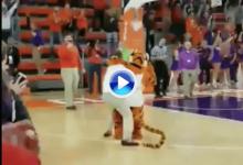 ¡Locura en una cancha de baloncesto! Un fan emboca un putt de 28 m. y se lleva 10 mil $ (VÍDEO)