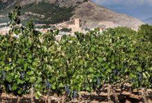 Jornada de enoturismo de la Com. Valenciana, cita imprescindible para los amantes del vino