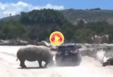 El ataque de un rinoceronte a un vehículo familiar en un zoo de México se hace viral en la red (VÍDEO)