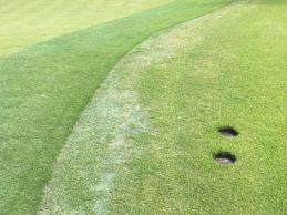 Los greenes de Bellerive sufren el calor y presentan este aspecto a pocos días del inicio del PGA