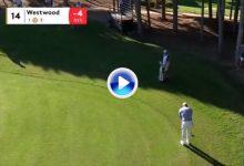 ¿Chip o putt? Westwood jugó desde la lejanía en el antegreen con madera 3 ¡vaya golpazo! (VÍDEO)