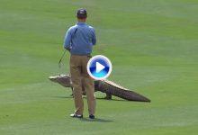 Estos fueron los 10 encuentros con animales más destacados en la historia del PGA Tour (VÍDEO)