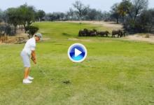 Leopardos, elefantes, leones… El campo más salvaje del mundo está en Sudáfrica (Incl. VÍDEO)