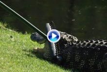 El día en el que un caddie se enfrentó a un caimán con un rastrillo en el Heritage ¡y no fue la única!