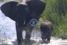 Guepardos, rinocerontes, elefantes… La fauna de Sudáfrica, protagonista del inicio de temporada
