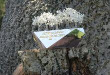 Las entradas del Andalucía Masters en Valderrama ya están a la venta. ¡Pídeselas a los Reyes Magos!