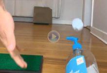 Joshua Kelley, el gran artista de los Trick Shots, eliminó el 99,99 de los gérmenes con este golpe